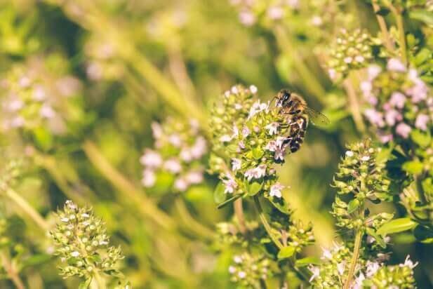 蜂蜜ってどの花から作られているの?花の種類を紹介!